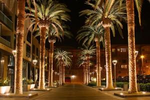 1200px-SAN_JOSE_CALIFORNIA_PALM_TREE_2010