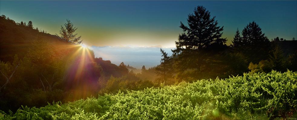 Winery in Saratoga in the Santa Cruz Mountains